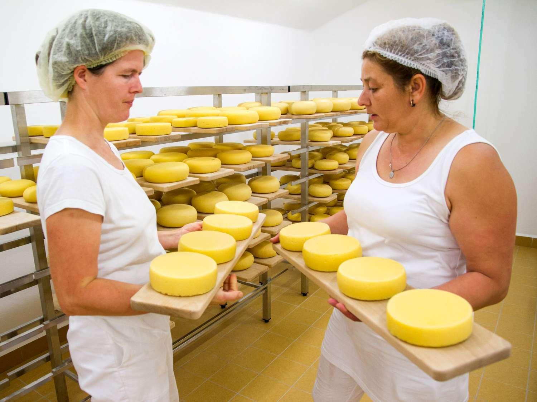 Kontrola zrání biosýrů v sýrárně společnosti Bemagro, a.s.