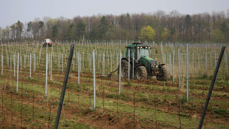 Úprava vinice s pomocí traktoru