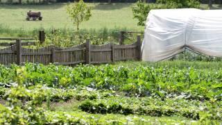 Zeleninové záhony a fóliovník na statku Fořt