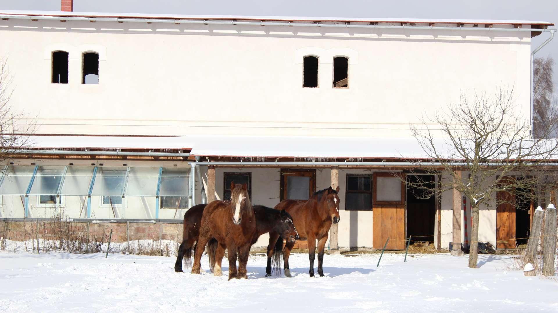 Koně přes stájemi