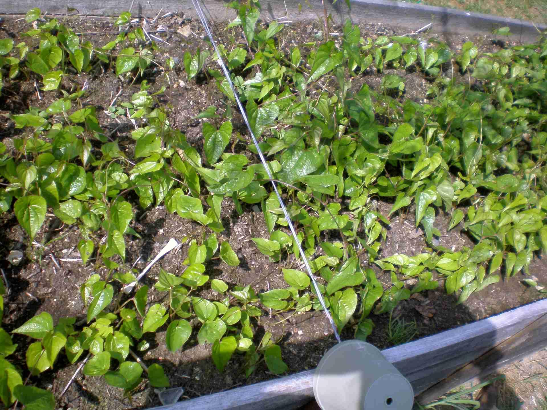 Ohrádka zaplněná mladými rostlinkami