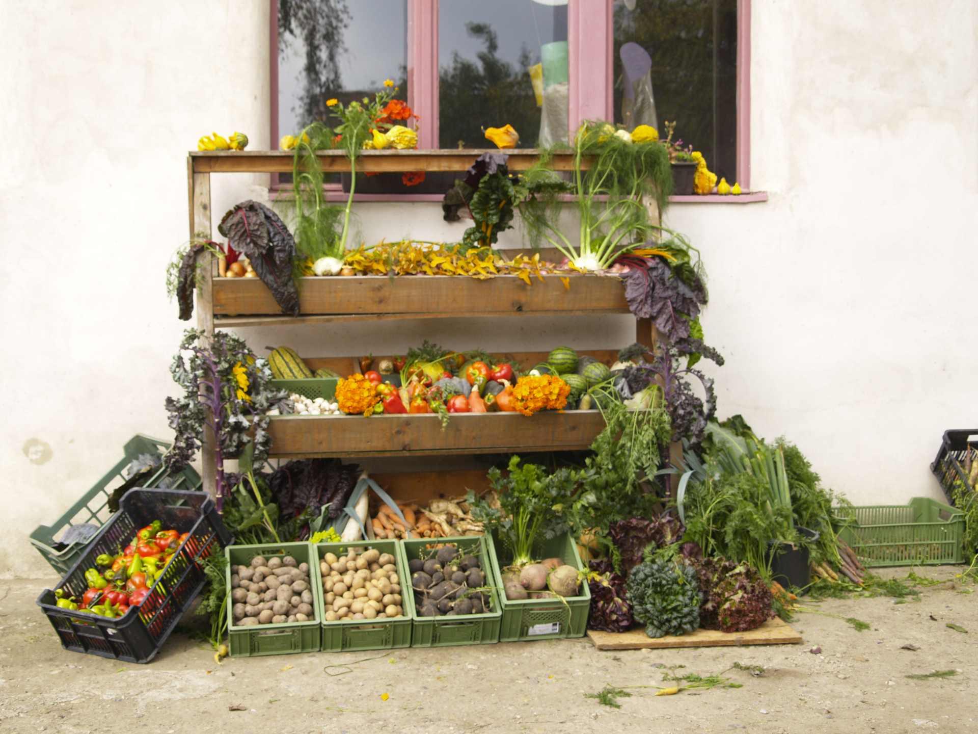 """Prodej biodynamicky vypěstované zeleniny """"ze dvora"""""""