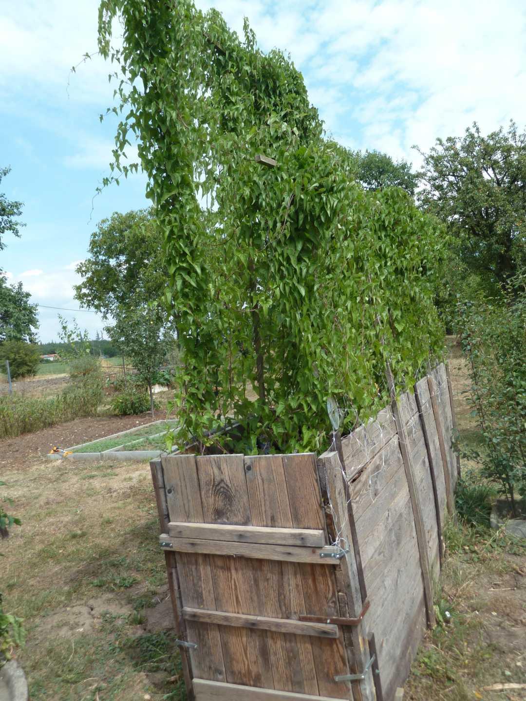 Podlouhlá dřevěná ohrádky pro pěstování