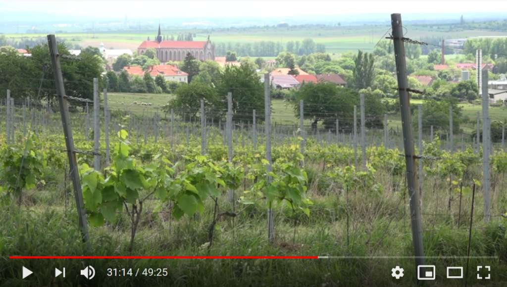 Záběr z filmu Víno biodynamicky