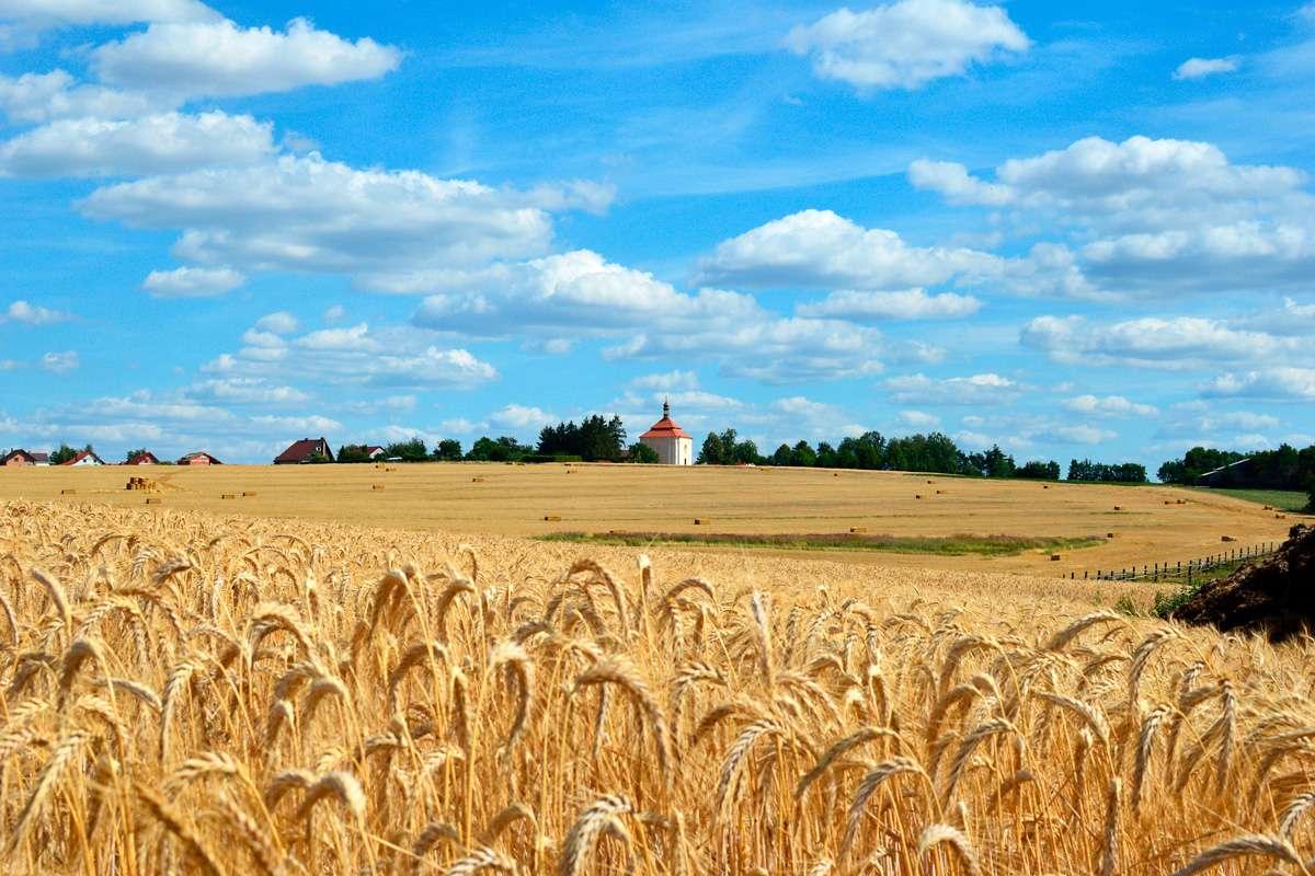 Agronom na biodynamické farmě ve Vstiši